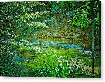 Canvas Print featuring the photograph Orara River by Wallaroo Images