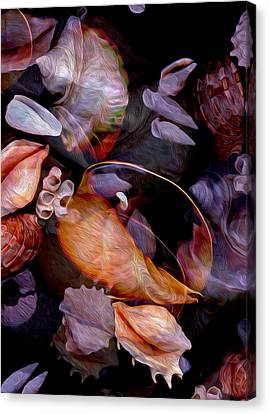 Orbiting Seashells Canvas Print by Lynda Lehmann