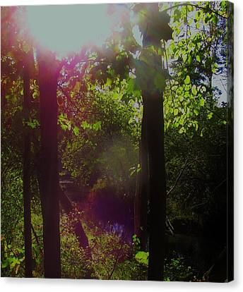 Orbs In The Forest Canvas Print