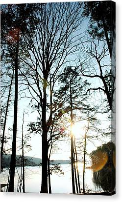 Orbs In The Trees Canvas Print by Kicking Bear  Productions