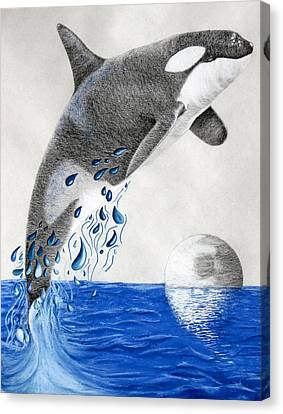 Canvas Print featuring the drawing Orca by Mayhem Mediums