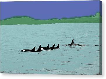 Orca Pod Canvas Print by Al Bourassa
