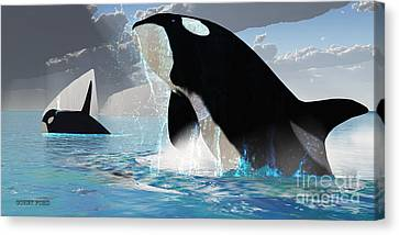 Orca Whales Canvas Print by Corey Ford