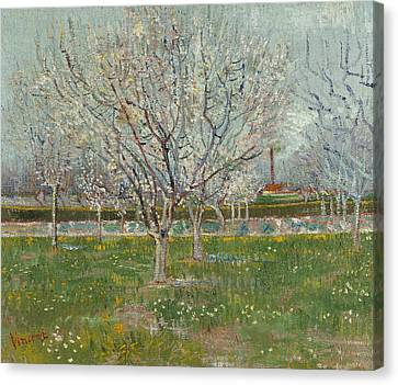 Orchard In Blossom  Canvas Print by Vincent van Gogh