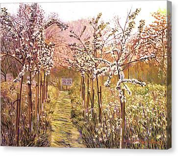 Orchard Morning Canvas Print by David Lloyd Glover