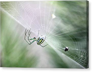 Canvas Print featuring the photograph Orchard Orbweaver Spider  by Trina Ansel