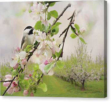 Orchard Visitor 2 Canvas Print