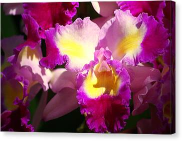 Orchid 1 Canvas Print by Marty Koch
