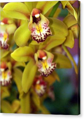 Orchid 11 Canvas Print by Marty Koch