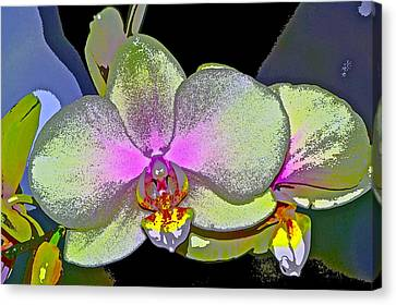 Orchid 2 Canvas Print by Pamela Cooper