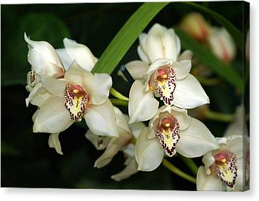 Orchid 3 Canvas Print by Marty Koch