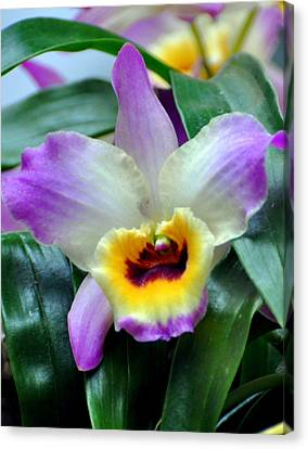 Orchid 34 Canvas Print by Marty Koch
