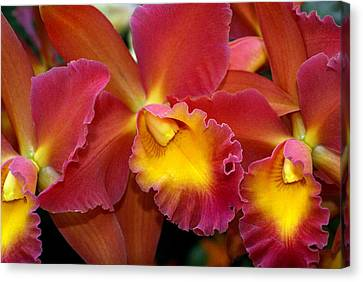 Orchid 8 Canvas Print by Marty Koch