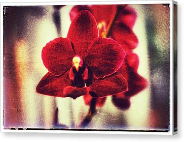 Canvas Print featuring the photograph Orchid Alone by Isabella F Abbie Shores FRSA