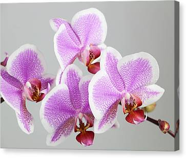 Orchid Array Canvas Print