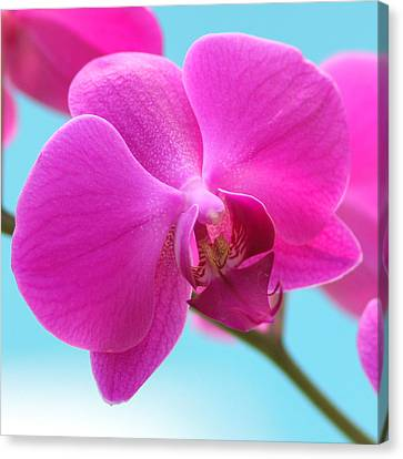 Orchid At The Ocean Closeup Canvas Print by Michi Sherwood