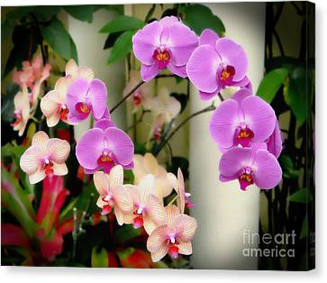 Canvas Print featuring the photograph Orchid Beauties by Sue Melvin