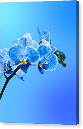 Orchid Blue Canvas Print by Mark Rogan