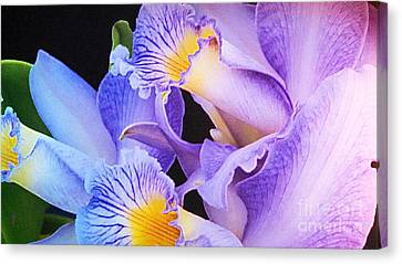 Orchid Bouquet Canvas Print by Cindy Manero