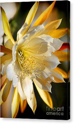 Orchid Cacti Beauty Canvas Print