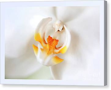 Canvas Print featuring the photograph Orchid Detail by Ariadna De Raadt