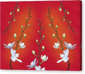 Orchid Ensemble Canvas Print by Tom Mc Nemar