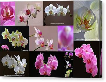 Orchid Fine Art Flower Photography Canvas Print by Juergen Roth