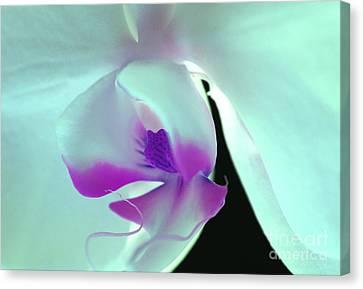 Orchid Goddess Canvas Print by Krissy Katsimbras