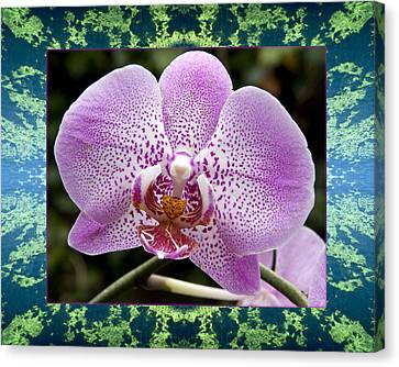 Canvas Print featuring the photograph Orchid Goodness by Bell And Todd