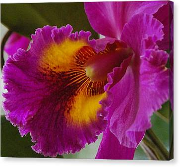 Canvas Print featuring the photograph Orchid In The Wild by Debbie Karnes