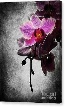 orchid IV Canvas Print by Hannes Cmarits