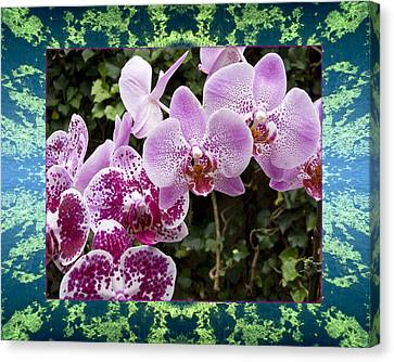Canvas Print featuring the photograph Orchid Kindness by Bell And Todd