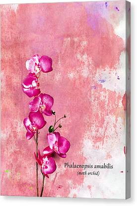 Orchid Canvas Print by Mark Rogan