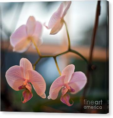 Orchid Menage Canvas Print