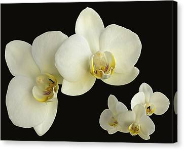 Orchid Montage Canvas Print by Hazy Apple