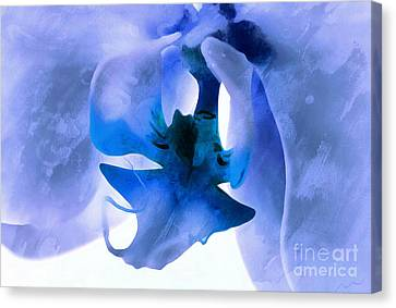 Orchid Of Blue Canvas Print by Krissy Katsimbras