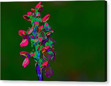 Orchid Canvas Print by Richard Patmore