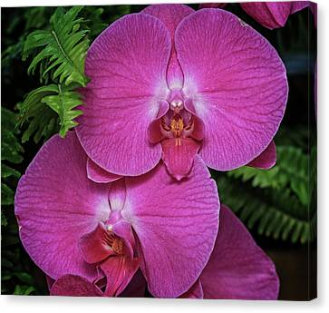 Canvas Print featuring the photograph Orchid by Robert Pilkington