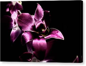Orchid Canvas Print by Sheryl Thomas