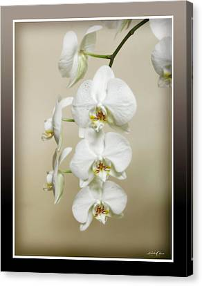 Orchid Spray Canvas Print by Linda Olsen