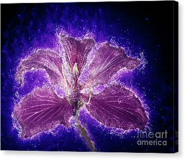 Orchid Tree Flower Canvas Print