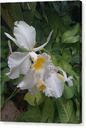 Canvas Print featuring the photograph orchid VIII by Fanny Diaz