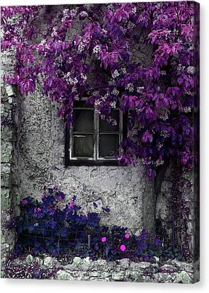 Orchid Vines Window And Gray Stone Canvas Print by Brooke T Ryan