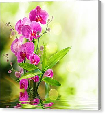 Orchidaceae Canvas Print by Thomas M Pikolin