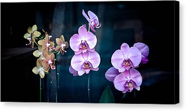 Orchidae Canvas Print by Maggie Terlecki