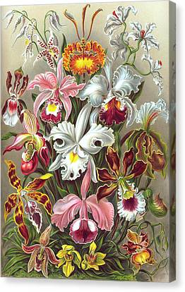 Orchidae Orchids Canvas Print by Ernst Haeckel