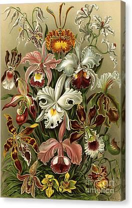 Orchideae Canvas Print