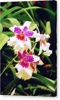 Canvas Print featuring the painting Orchids 1 by Sandy MacGowan