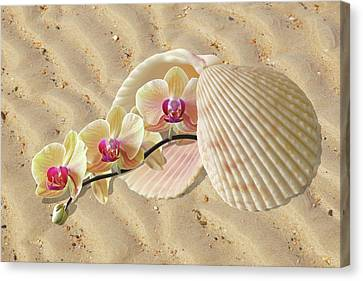 Orchids And Shells On The Beach Canvas Print by Gill Billington