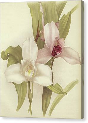 Orchids Canvas Print by English School